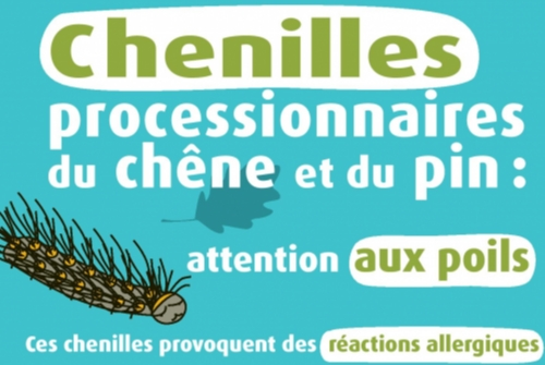 CHENILLES PROCESSIONNAIRES...ATTENTION DANGER